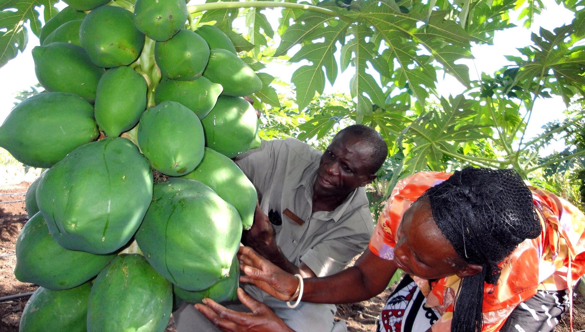 projet de formation professionnelle de haïtiennes